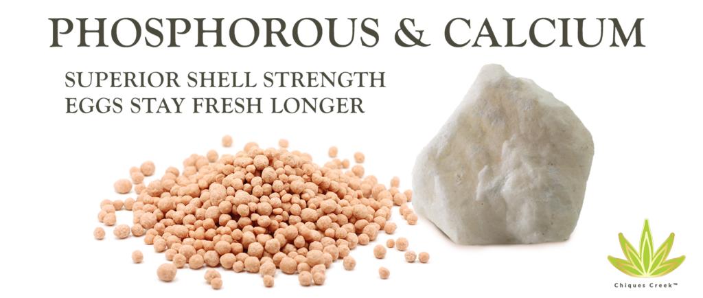 Phosphorous & Calcium
